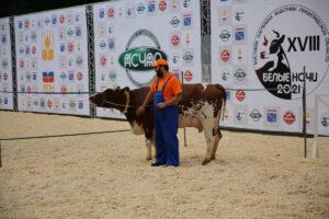 Студенты и преподаватели СПбГУВМ приняли участие в ежегодной выставке племенных коров «Белые ночи»